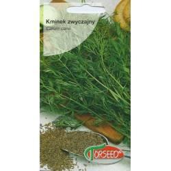 Torseed 2g Kminek Zwyczajny Rekord Zioła Nasiona