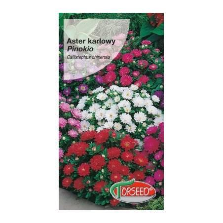 Torseed 1g Aster Karłowy Pinokio Niski Nasiona Kwiatów