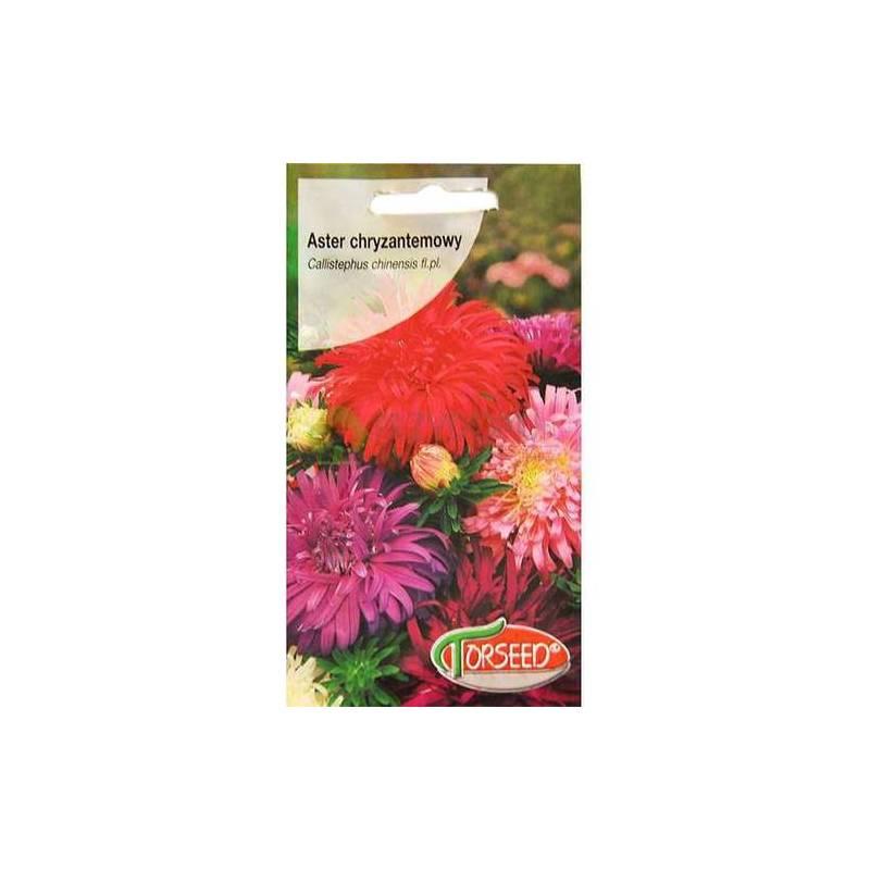 Torseed 1g Aster Chryzantemowy Mieszanka Nasiona Kwiatów