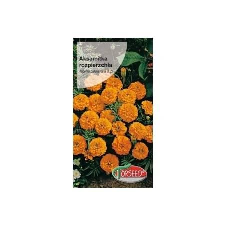 Torseed 1g Aksamitka Rozpierzchła Niska Petite Orange Nasiona Kwiatów