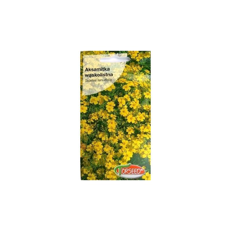 Torseed 1g Aksamitka Wąskolistna Lulu Niska Żółta Nasiona Kwiatów