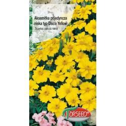 Torseed 1g Aksamitka Pojedyncza Niska Typ Disco Yellow Żółta Nasiona Kwiatów