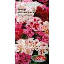 Torseed 1g Godecja wielkokwiatowa mieszane Marszawa nasiona kwiatów