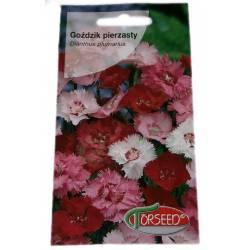 Torseed 0,5g Goździk pierzasty wieloletni bylina nasiona kwiatów