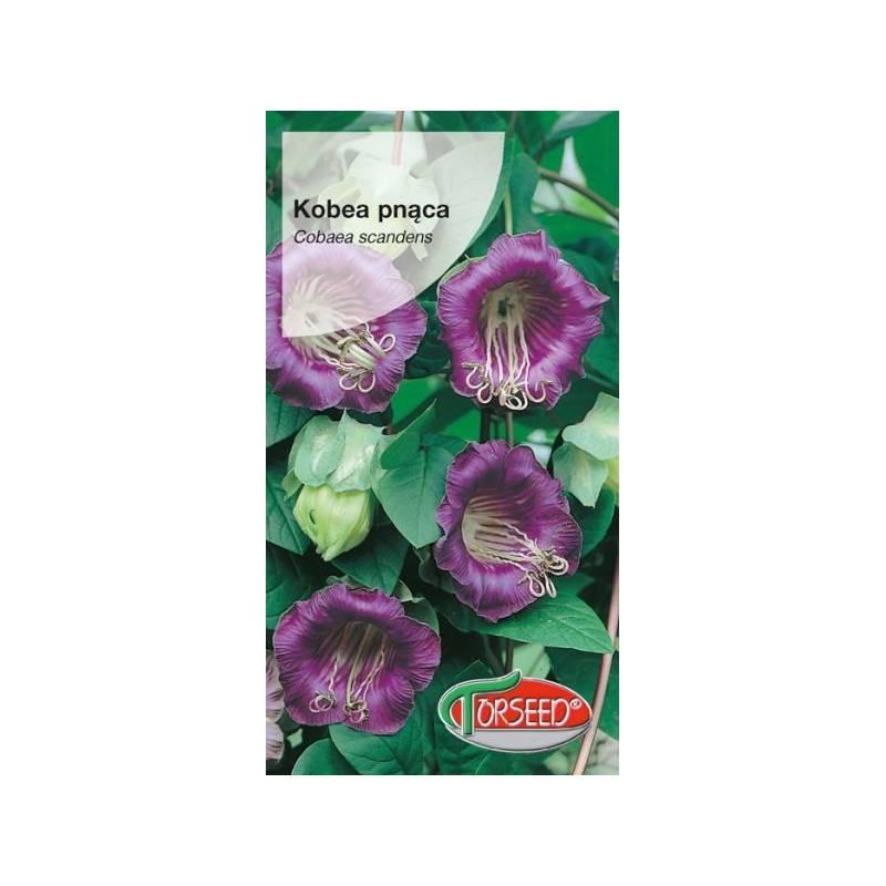 Torseed 0,8g Kobea pnąca fioletowa na pergole nasiona kwiatów