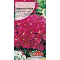 Torseed 1g Godecja wielkokwiatowa karminowo szkarłatna azalia letnia nasiona