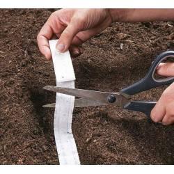 AbezA Marchew Berlikumer 2 Perfekcja Nasiona na taśmie 6m późna do przechowywania