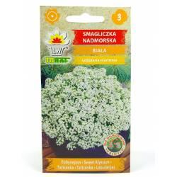 Toraf 0,5g Smagliczka Nadmorska Biała Nasiona kwiatów roślina jednoroczna skalniaki