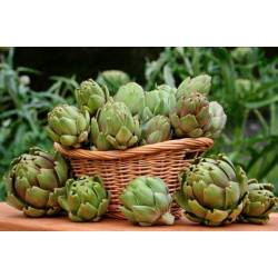 Torseed 1g Karczoch Zwyczajny Green Globe Nasiona