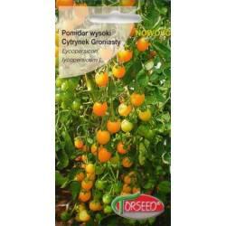 Torseed 0,1g Pomidor Cytrynek Groniasty Koralik Koktajlowy Nasiona