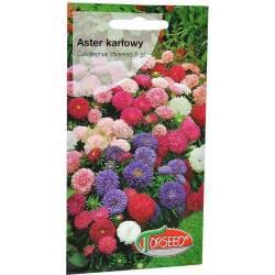 Torseed 1g Aster Karłowy Chiński Mieszanka Nasiona Kwiatów