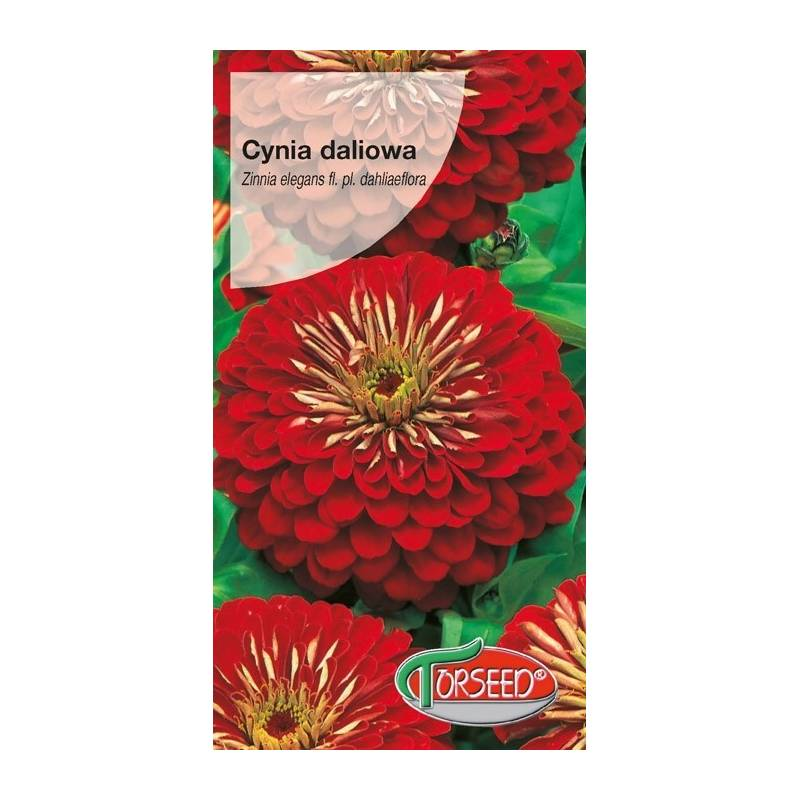 Torseed 1g Cynia daliowa Jowita czerwona nasiona kwiatów