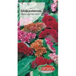 Torseed 0,5g Celozja grzebieniasta mieszanka kolorów nasiona kwiatów
