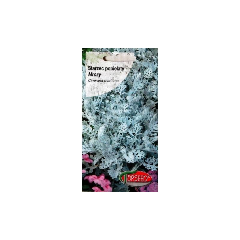 TORSEED 0,5G STARZEC POPIELATY - MROZY