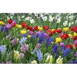 Floran Crystal 200g Nawóz krystaliczny do roślin kwitnących