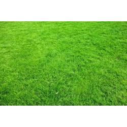 Ampol 2kg nawóz do trawników wieloskładnikowy granulowany nieorganiczny