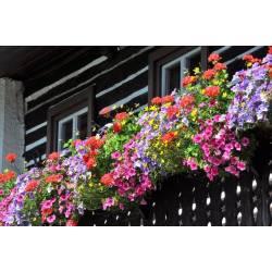 Ekodarpol 35ml Aplikator Extra Kwiaty balkonowe nawóz surfinie werbena begonia