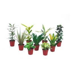 Ekodarpol 1l Biohumus Extra do palm juk i dracen w pełni naturalny