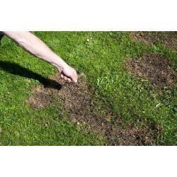 Forte 0,1 kg Trawnik regeneracja mieszanka traw