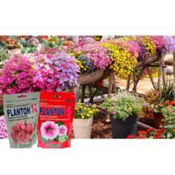 Planton K 800g 800L Nawóz do pelargonii i kwitnących Sundavilli Niecierpków Hibisksów Begonii Fuksji