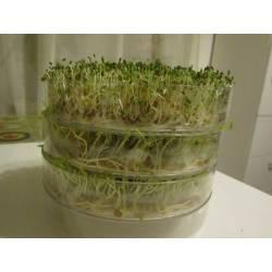 Kiełkownica Bio Natura naczynie do kiełkowania witaminy przez cały rok