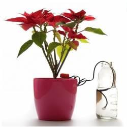 Prosperplast 2szt. Dozownik do podlewania roślin doniczkowych i balkonowych