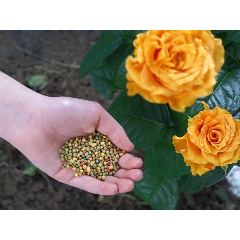 Forte Foska 1kg Nawóz wieloskładnikowy do róż wszystkich odmian